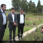 تولید سالانه یک میلیون اصله نهال در ایستگاه بذر و نهال پارس آباد