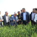شرکت پارس رکورددار تولید دانه های روغنی باکیفیت در کشور