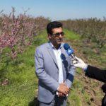 پیش بینی استحصال بیش از ۷۰۰ هزار تن انواع میوه از ۴۶۰۰ هکتار باغات شهرستان پارس آباد